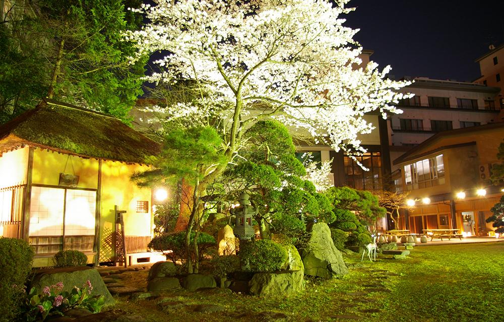 桜が映える日本庭園